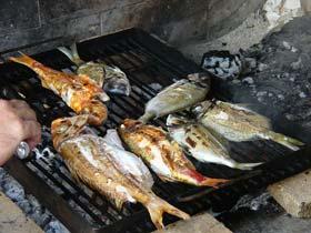 Bier zu gegrilltem Fisch