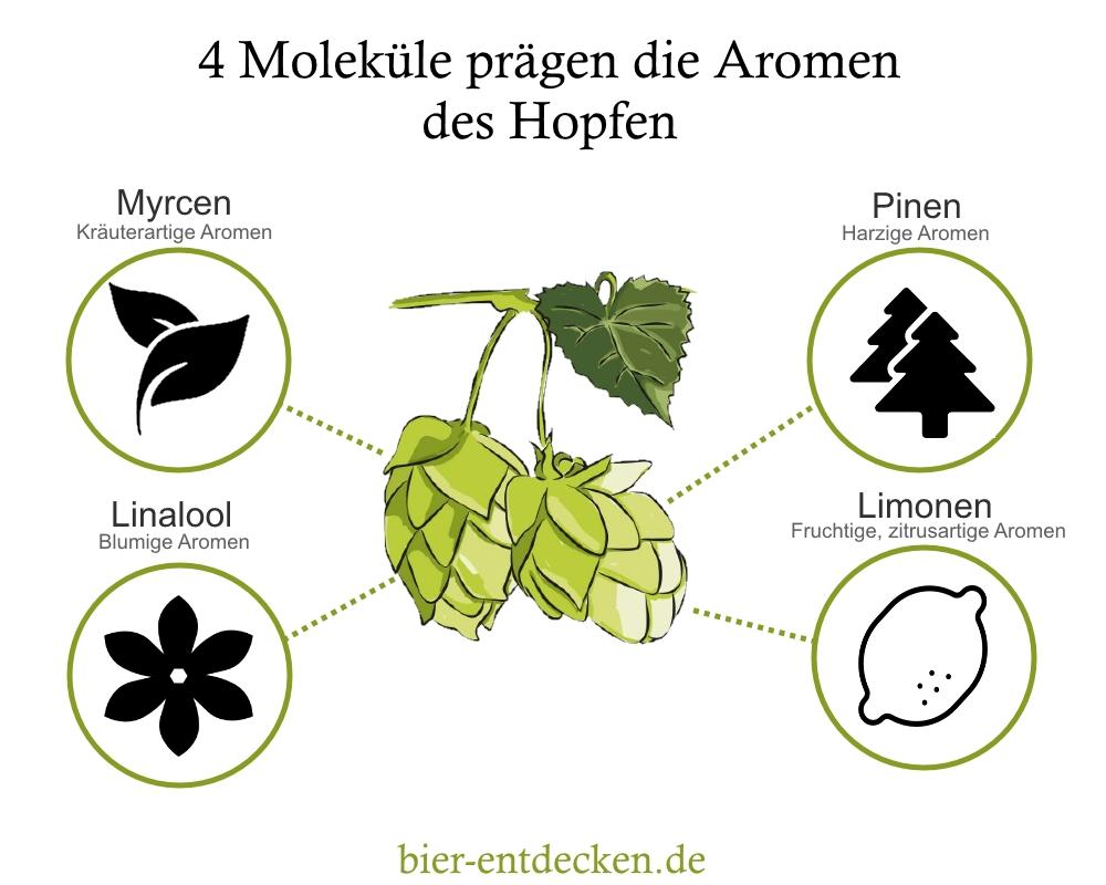 4 Moleküle Hopfen